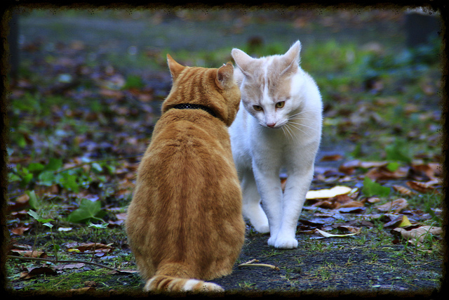 Juntar dos gatos en casa
