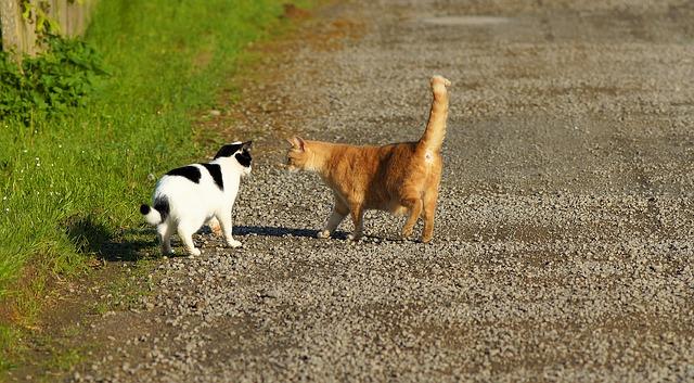 gatos que se conocen