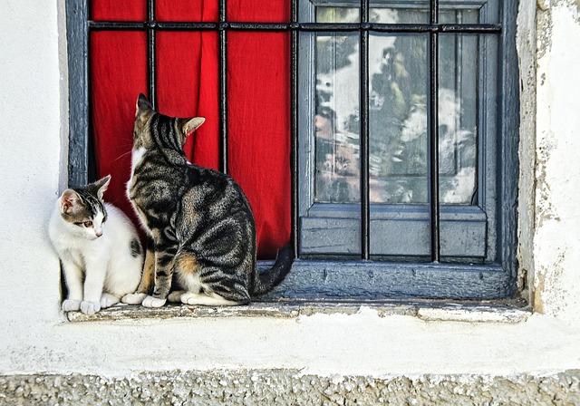 gatos conociendose