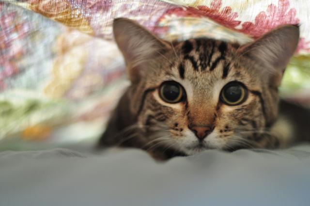 gato me tiene niedo