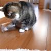 gato pata en vaso