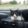 viajar con gatos en coche