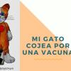 mi gato cojea por una vacuna 1