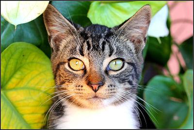 gato de exterior