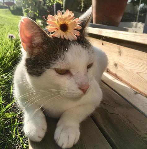 gato sentado en banco del jardín
