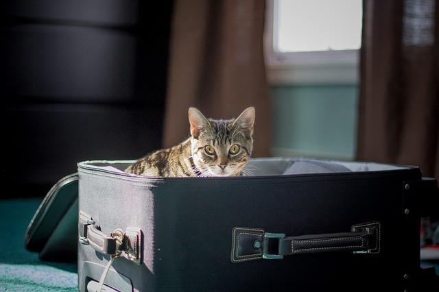 mudanza con un gato