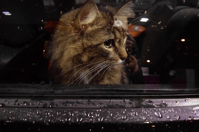 gato viajando en coche