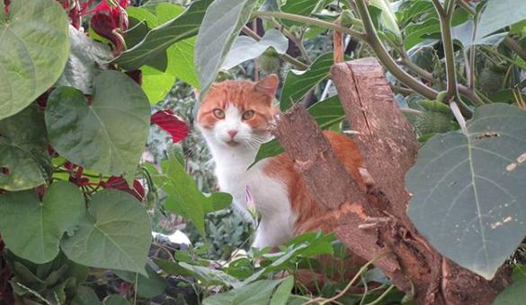 gato que sale al jardín