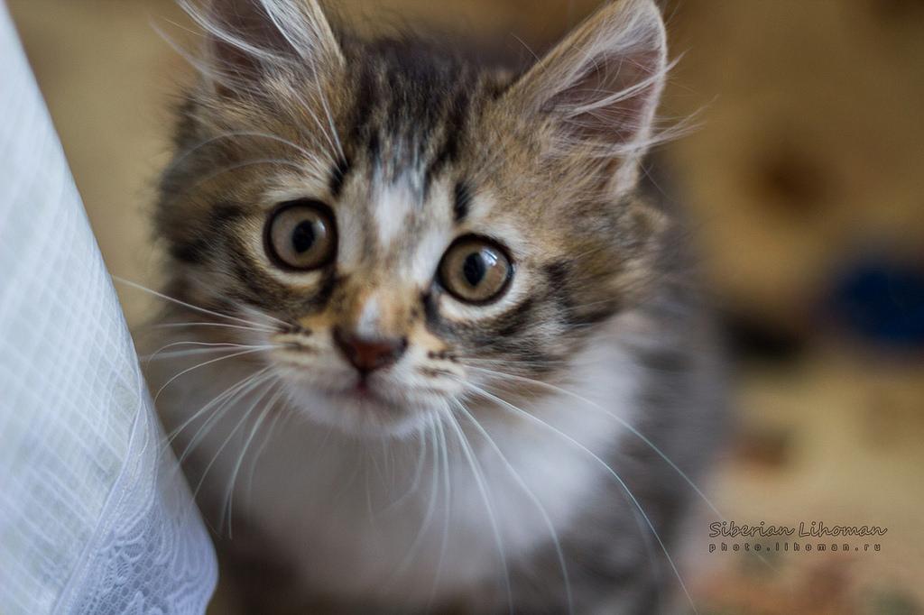 tranquilizar a tu gato si tiene miedo