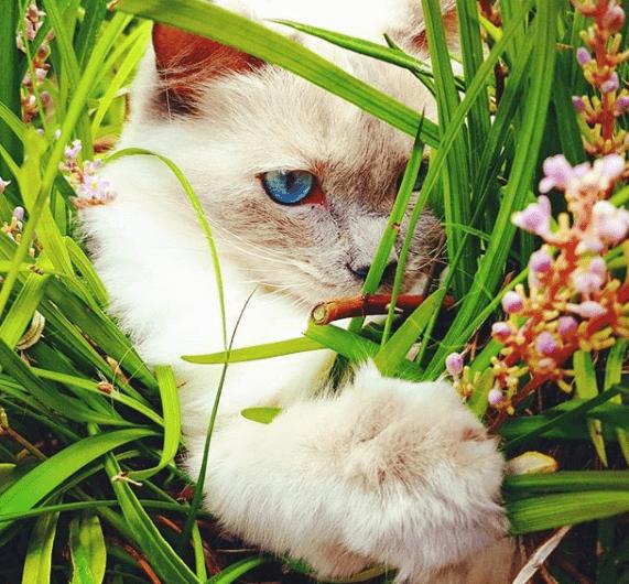 sacar gato al campo