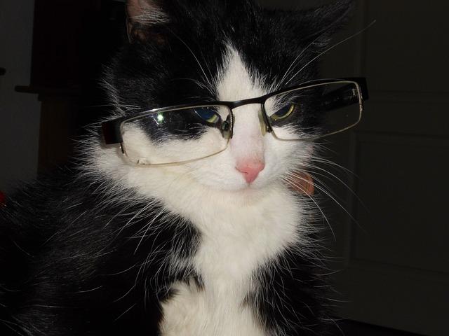 la vision de los gatos
