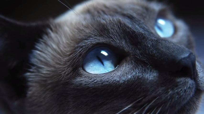 la vista de los gatos