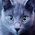 Qué colores ven los gatos