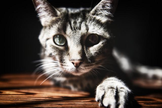 gato con tos