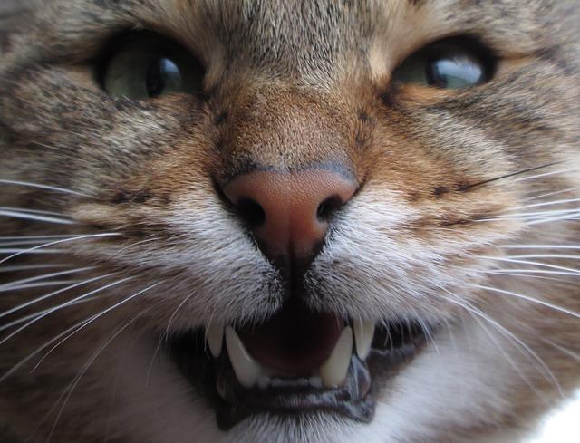 dientes del gato