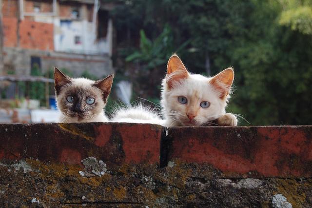 castración gatos consecuencias