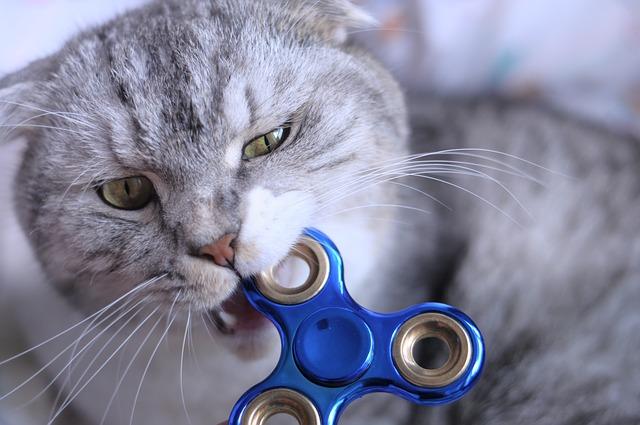 disciplinar a tu gato