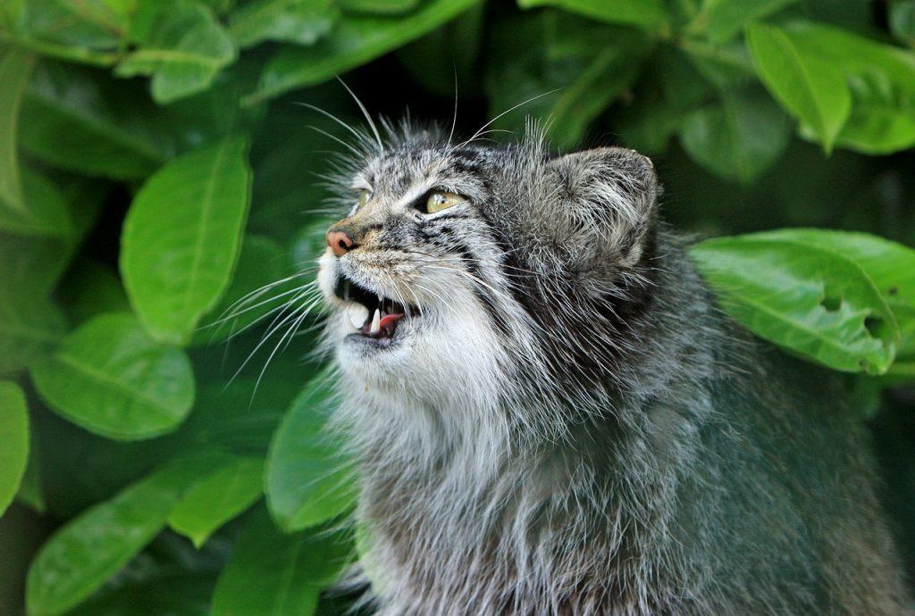 como ve un gato por la noche