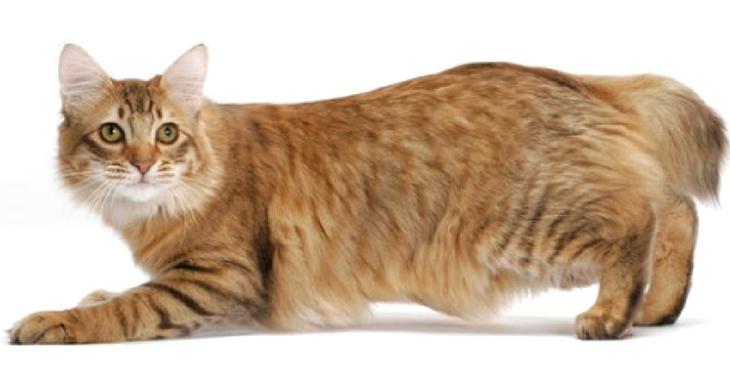 ▷ La bolsa primordial de los gatos【¿Para qué les sirve?】