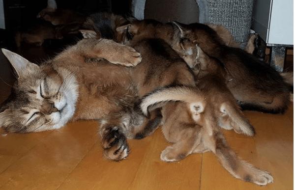 gata amamantando gatos