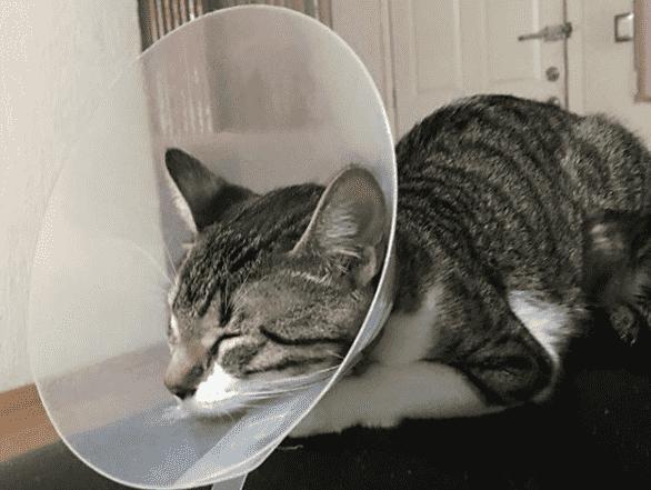 aspirina para gatos
