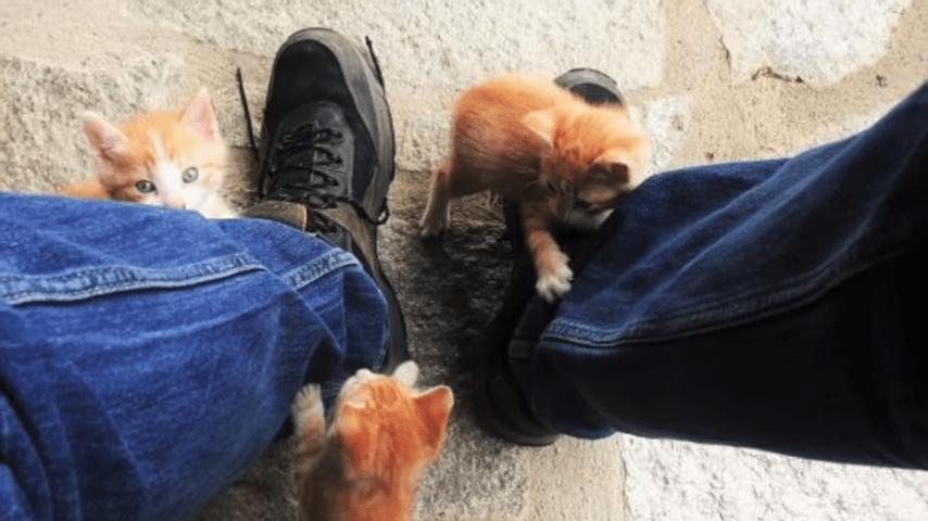 los gatos te prefieren