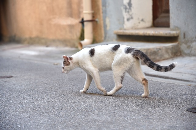 gato desaparecido