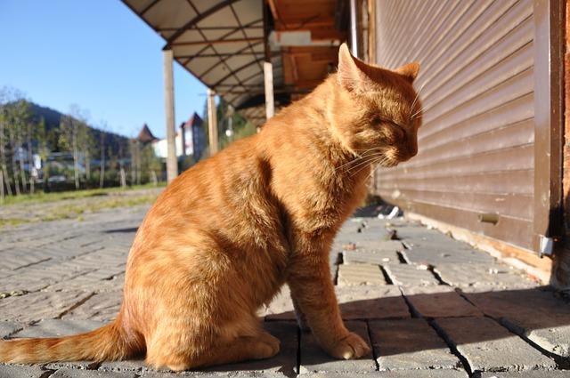consejos para buscar gato perdido