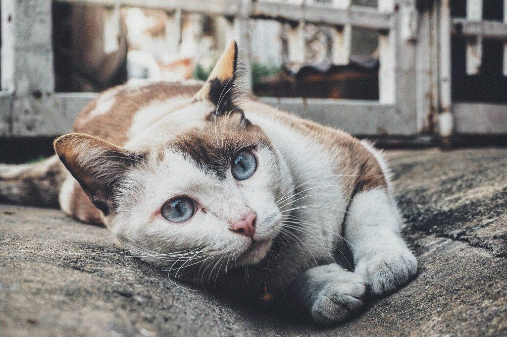gato perdido vuelve a casa