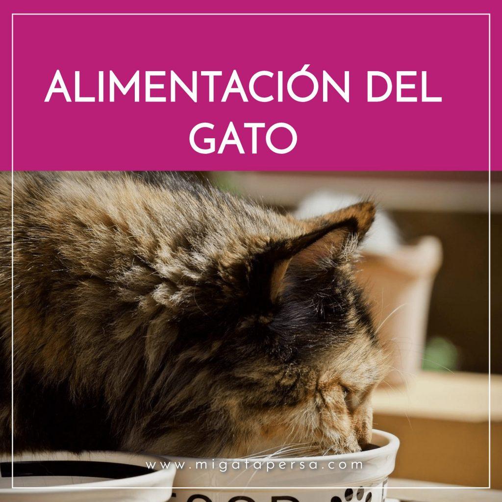 alimentación del gato
