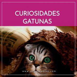 curiosidades gatunas