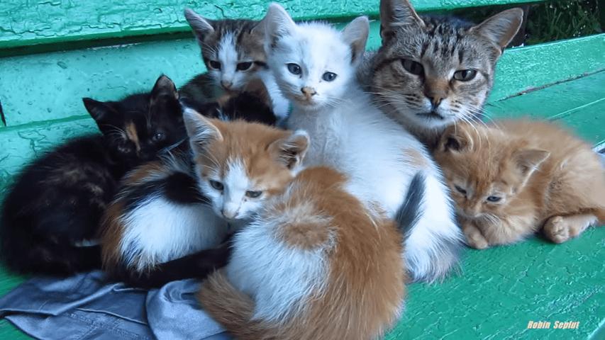 Cúanto dura parto gata