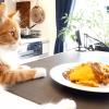 gato en mostrador de la cocina