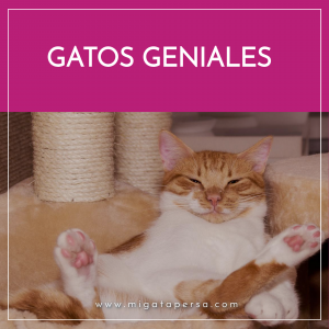 gatos divertidos