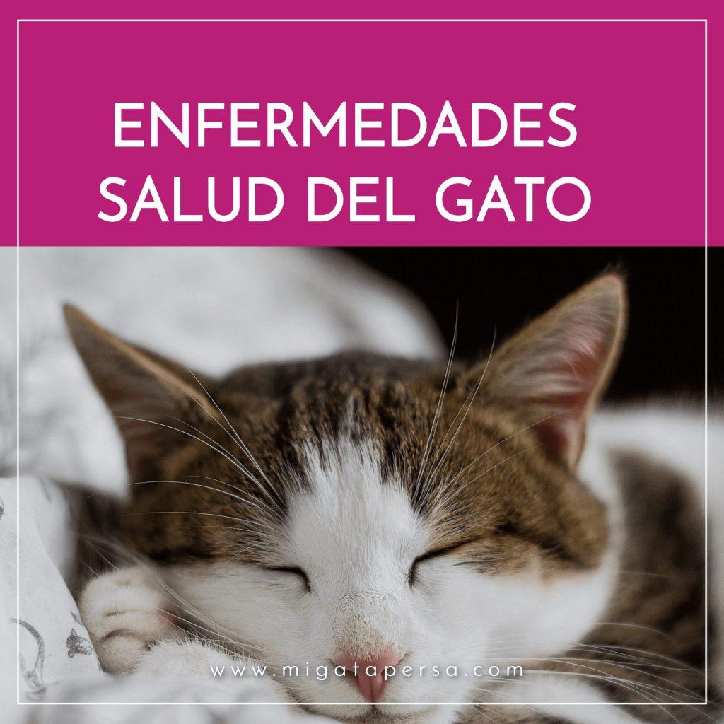 enfermedades y salud del gato