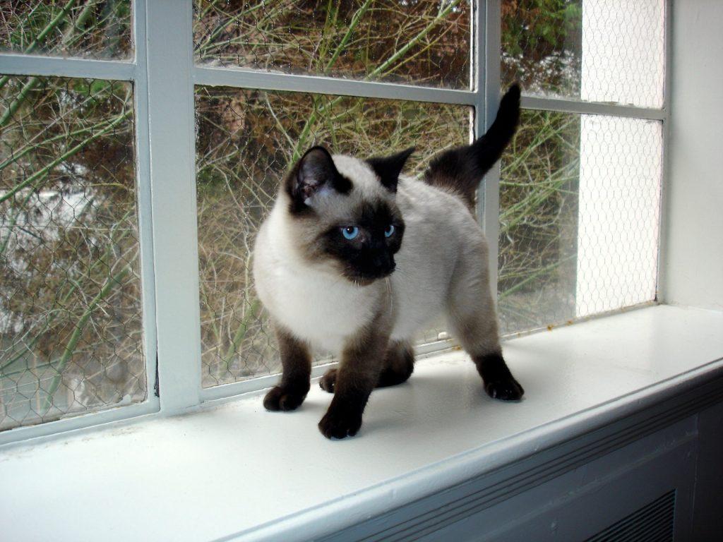 gatito solo en casa