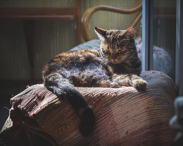 gato mayor de 7 años