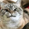 golosinas dentales gato