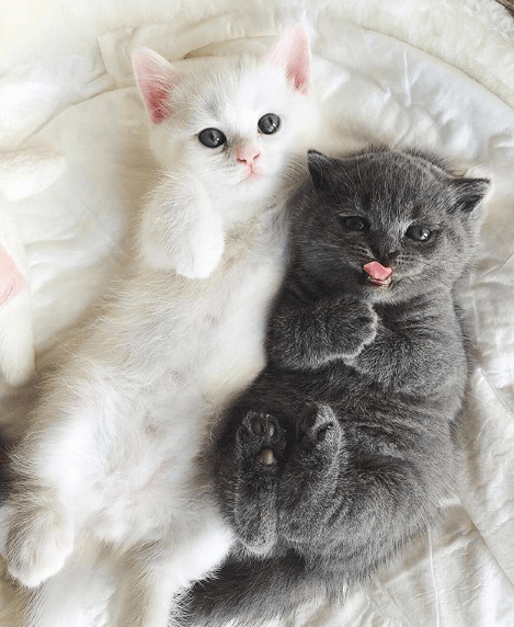 gatos cachorros