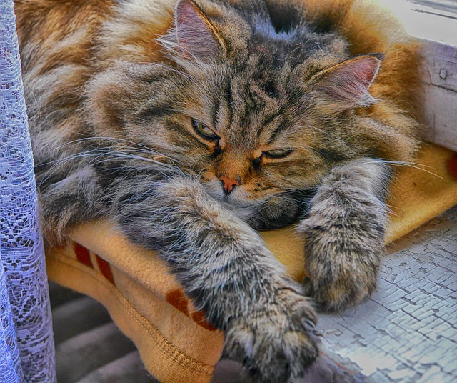 gato duerme de aburrimiento