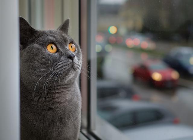 pulgas en gato que está en la ventana