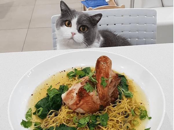 gatito con hambre