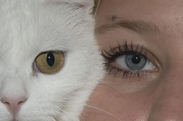 pulgas de humanos a gatos