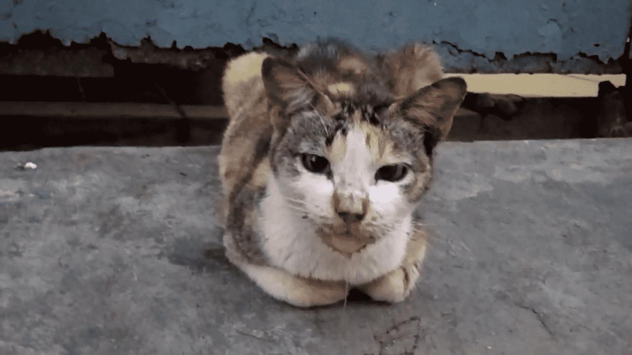gatito babeando