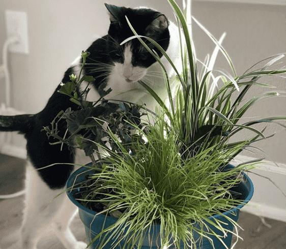 gato huele la planta