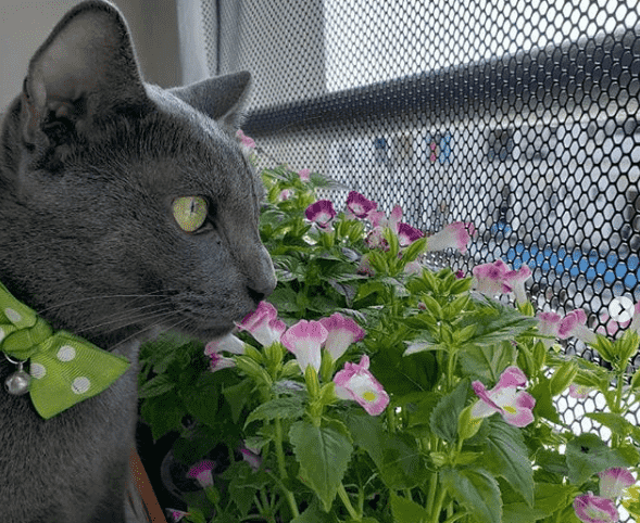 ahuyentar gatos de macetas