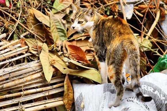 perdida de peso en el gato