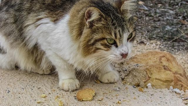 fibra para el estreñimiento del gato