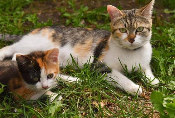 infección uterina de las gatas