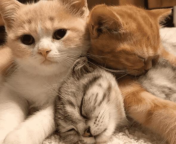 destete de gatitos
